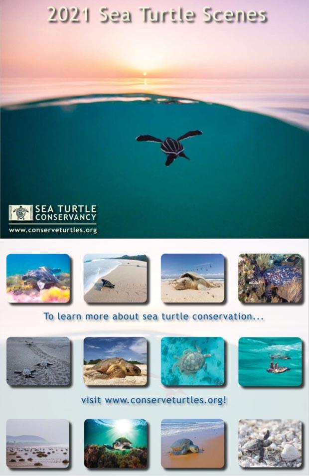 2021 Sea Turtle Scenes